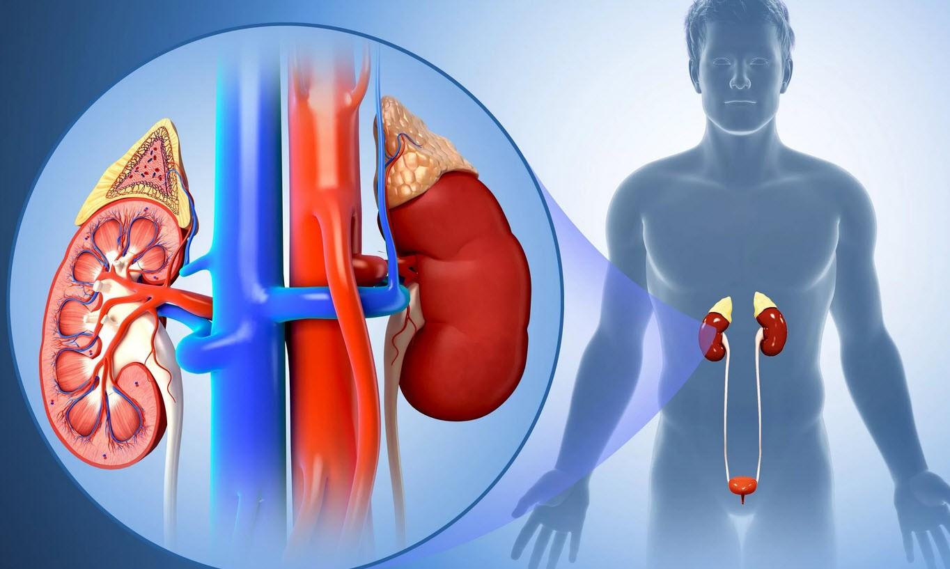 Причины обострения пиелонефрита